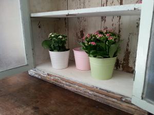Basisa b&b flower window