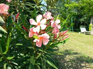 Basisa b&b oleandro rose
