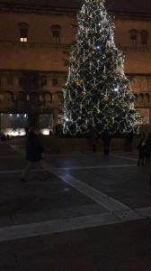 Bologna Albero Basisa